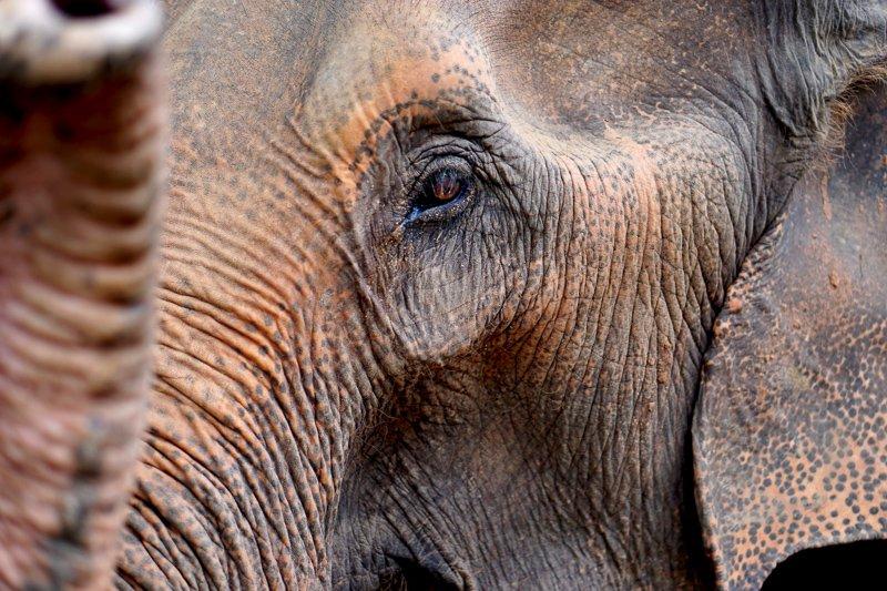 Deze dieren kom je tegen in het regenwoud van Thailand.