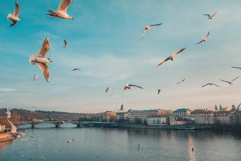 Praag is een van de leukste stedentrips in de winter.