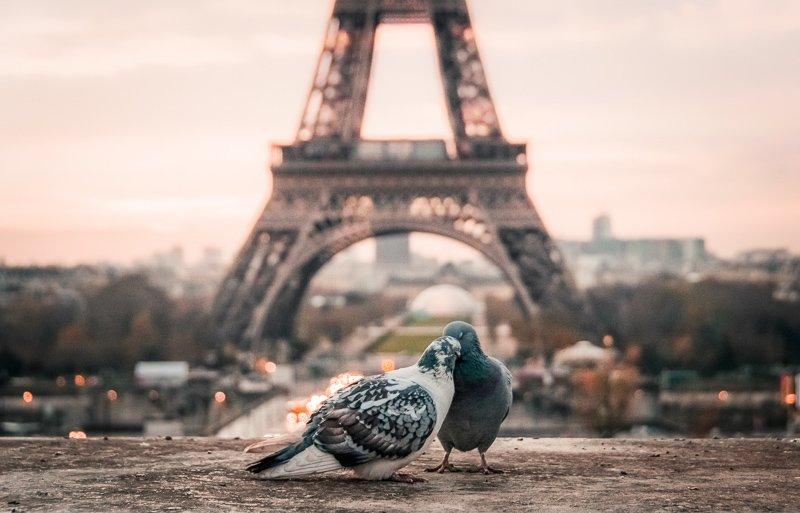 Parijs is altijd een goed idee als citytrip!