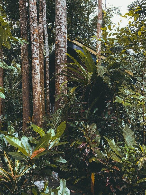 De jungle van Thailand!