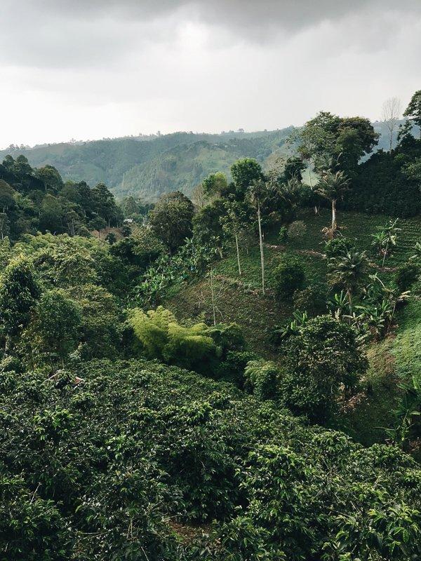 De groene omgeving van Salento