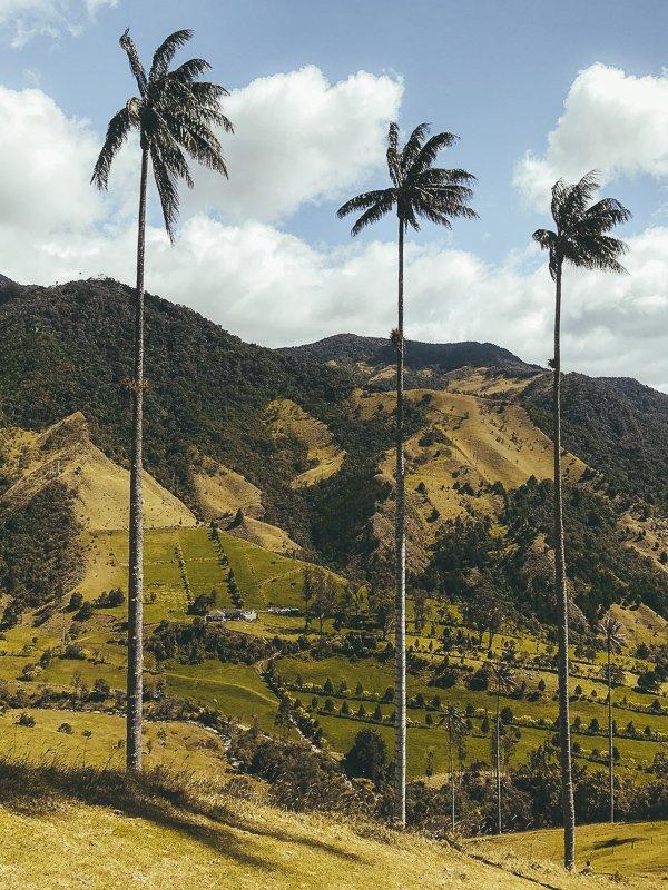 Uitzicht op de Cocora Vallei