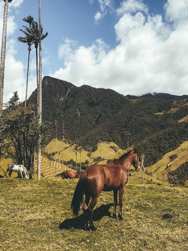 Paardrijden bij Salento