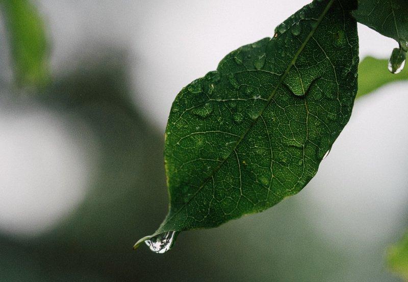 Regen in Midden-Amerika