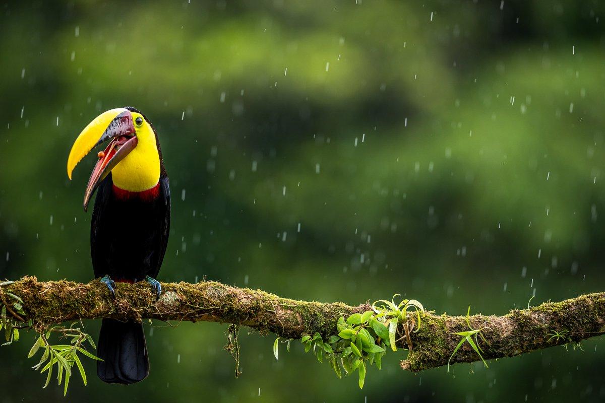 Hier lees je alles over het regenseizoen in Costa Rica!