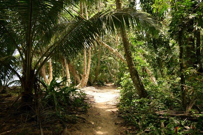 Wandelen door het Tortuguero National Park