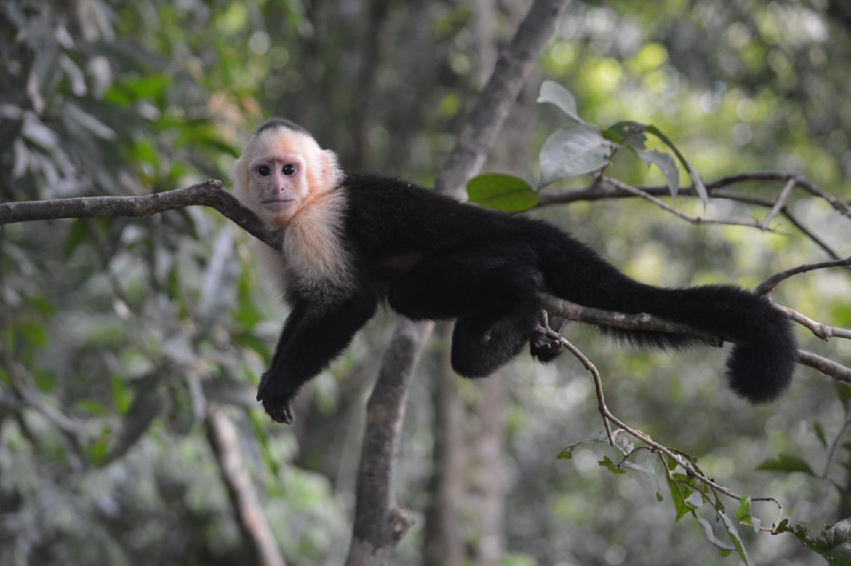 Hier lees je alles over het klimaat en de vliegtijd in Costa Rica!