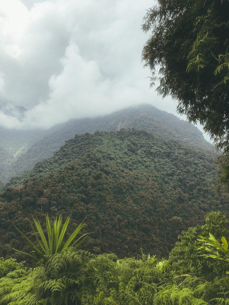 Uitzicht op een groene vallei tijdens de Verloren Stad hike