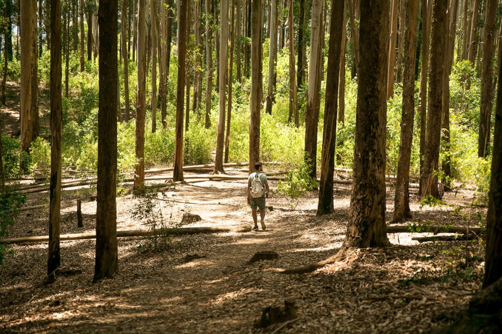 De route richting de top van Ella Rock