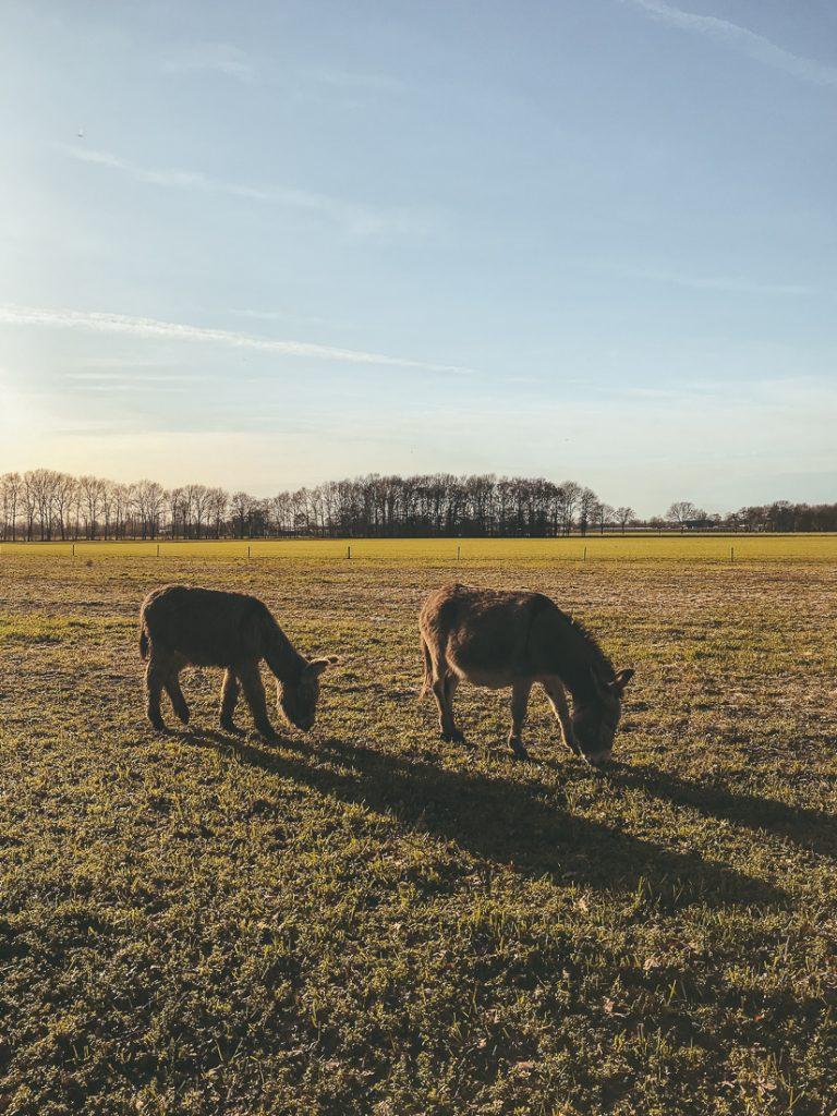 De ezelboerderij