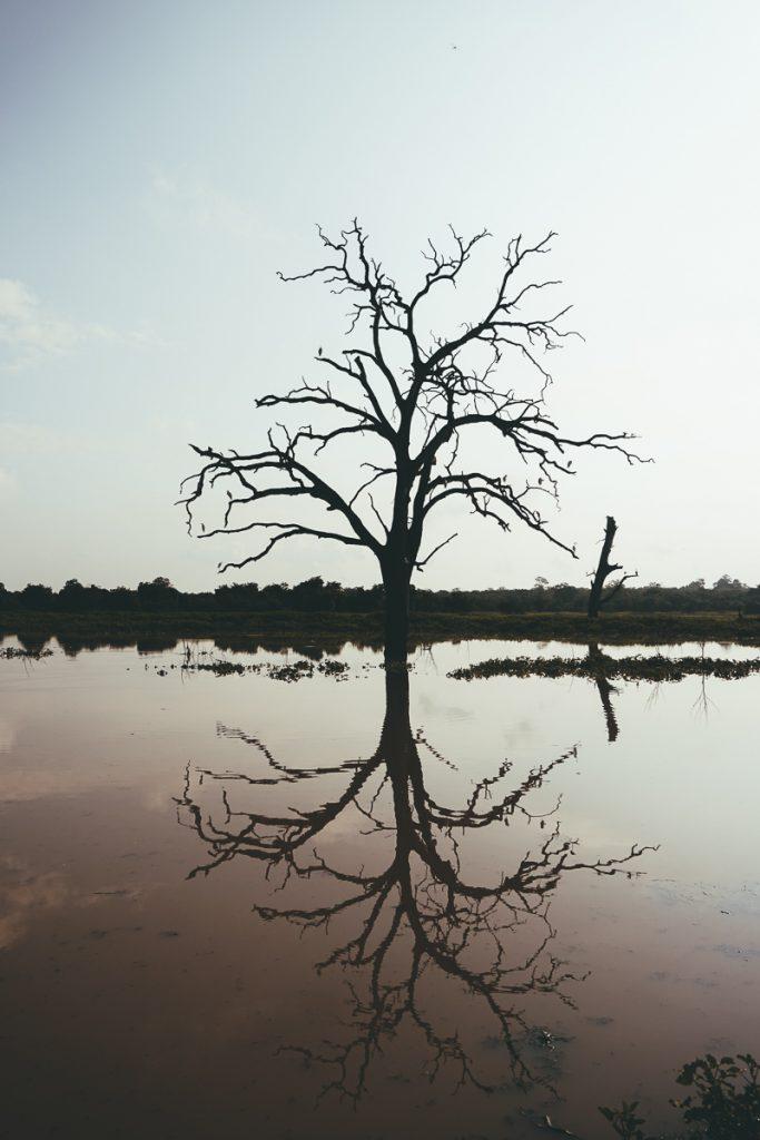 De waterplas