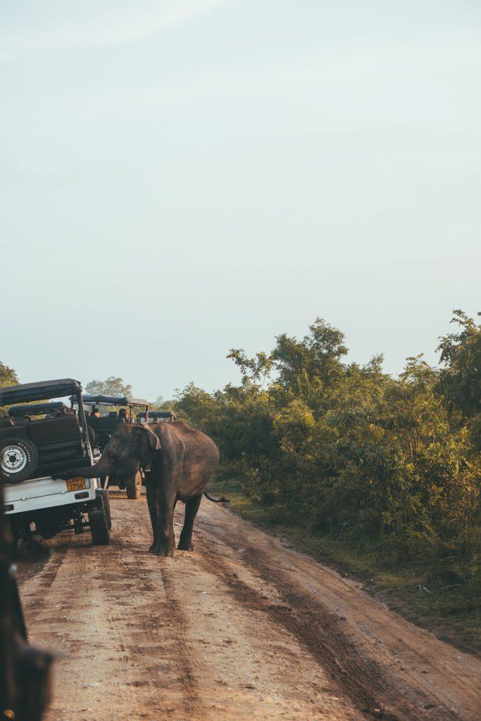 De jeeps in het Udawalawe National Park
