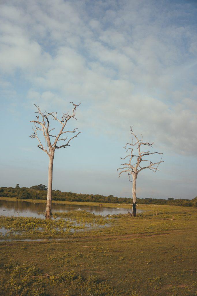 Het landschap in Udawalawe