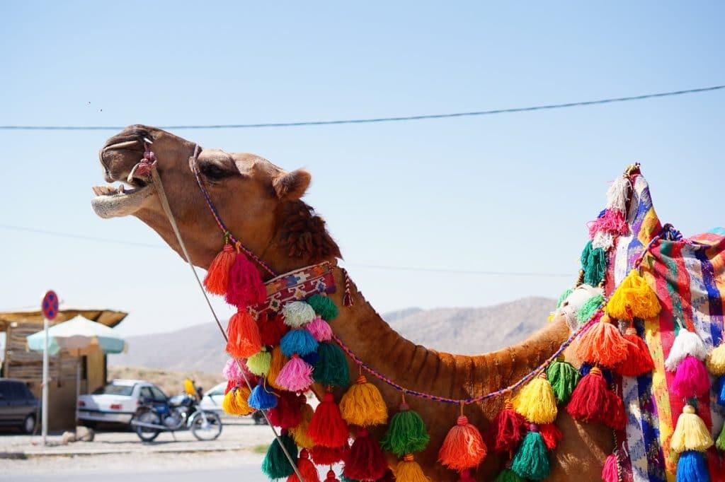 Een versierde kameel waarmee je een ritje op kunt rijden