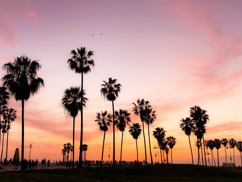 Palmbomen en een paarse lucht tijdens een roadtrip door West-Amerika