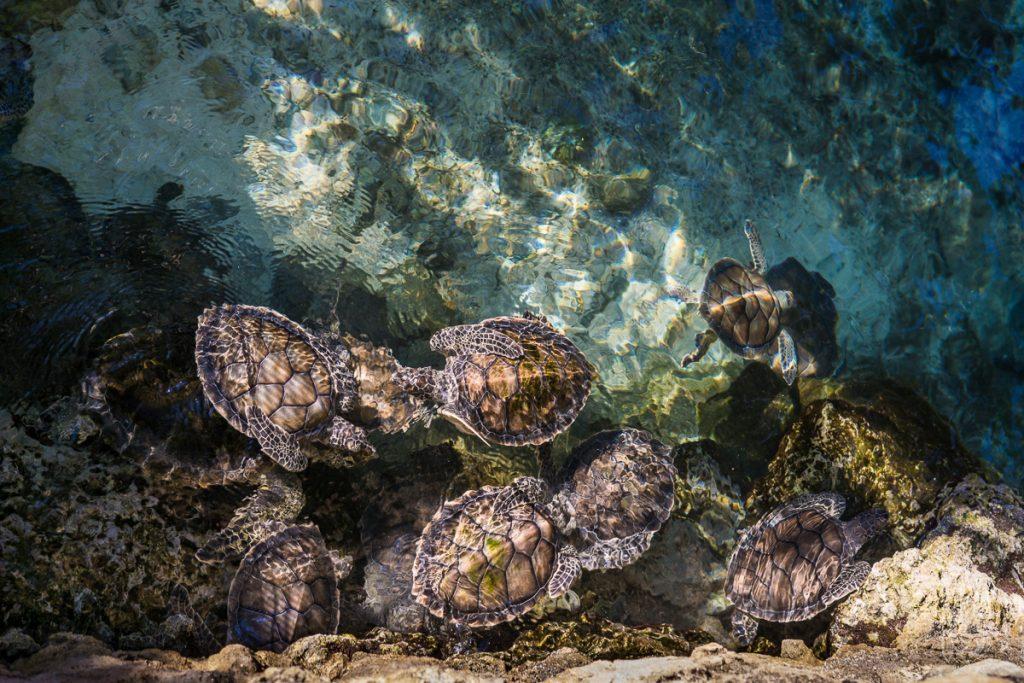 Schildpadden in het helderblauwe water tijdens het snorkelen, wat één van de leukste tips voor Playa del Carmen is