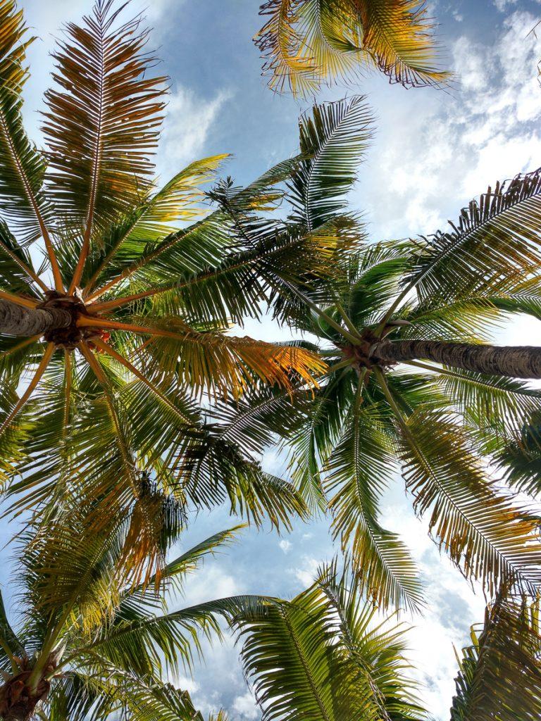 Palmbomen op het strand van Playa del Carmen in het zuiden van Mexico