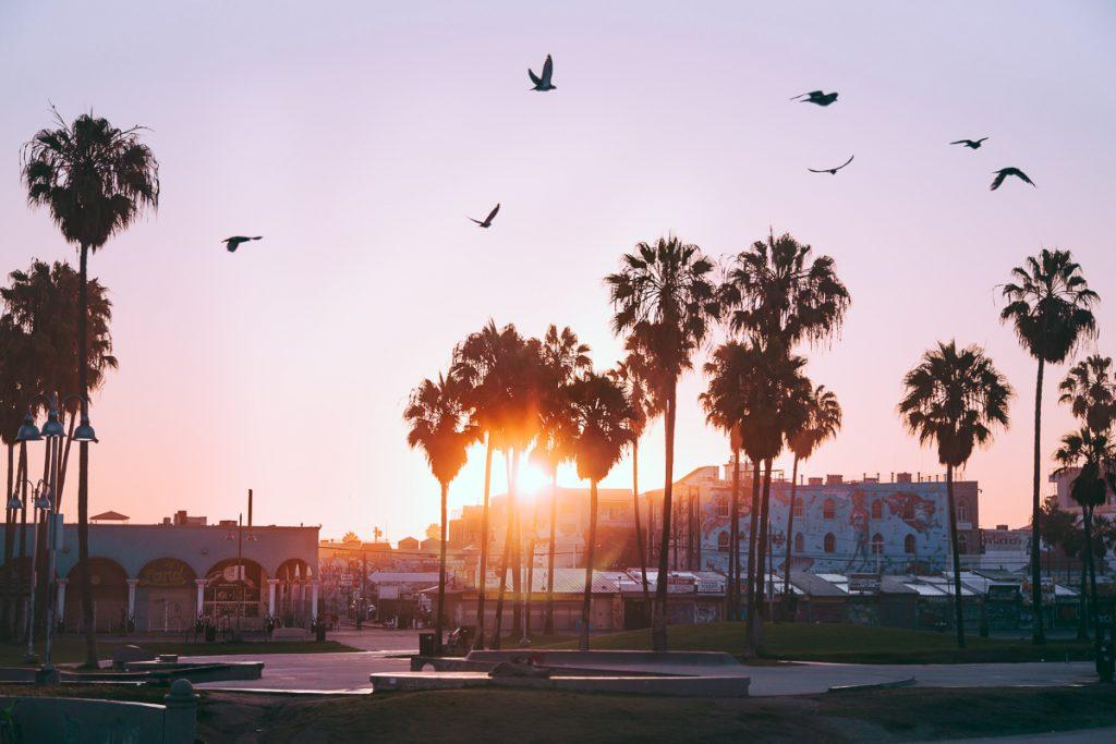 Zonsondergang, palmbomen, vogels en een paarse lucht bij Venice Beach in Los Angeles