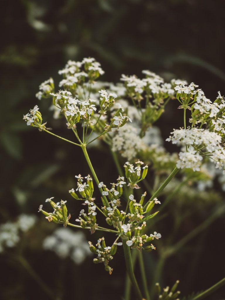 Witte en groene bloemen