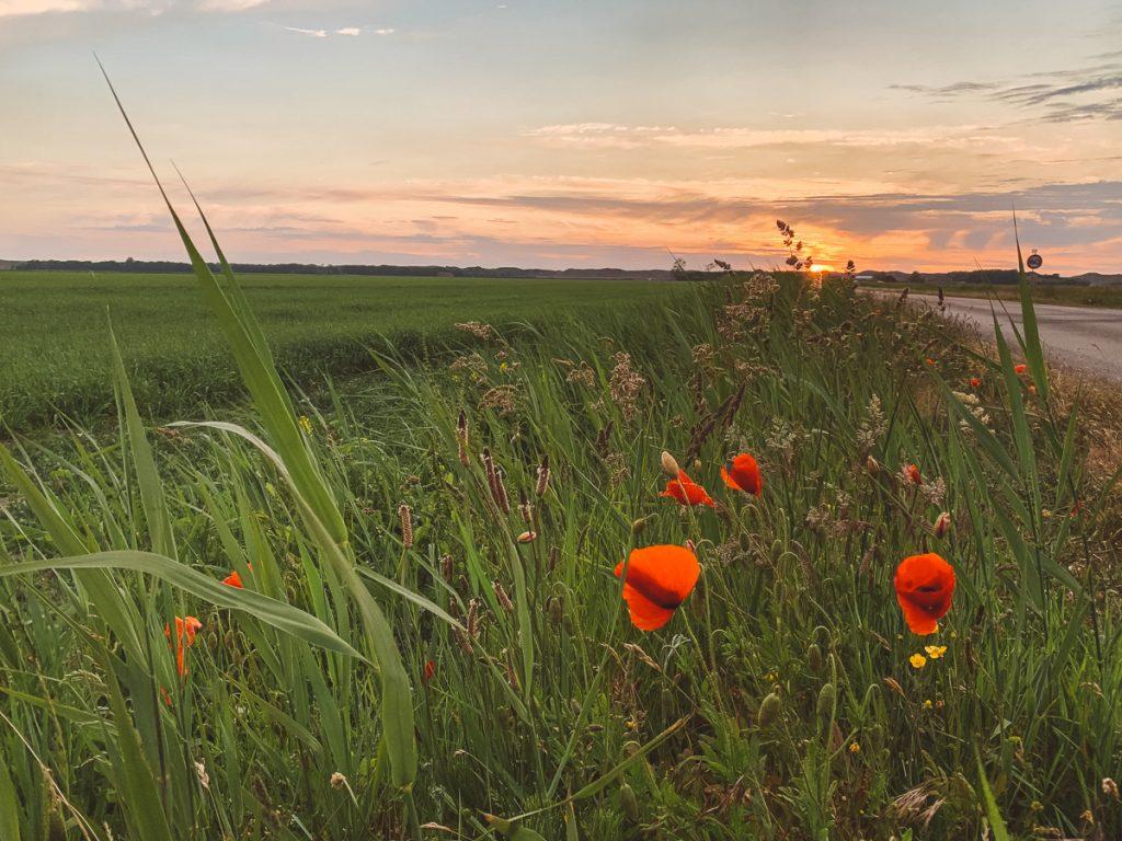 Oranje lucht met rode klaprozen en gifgroen gras