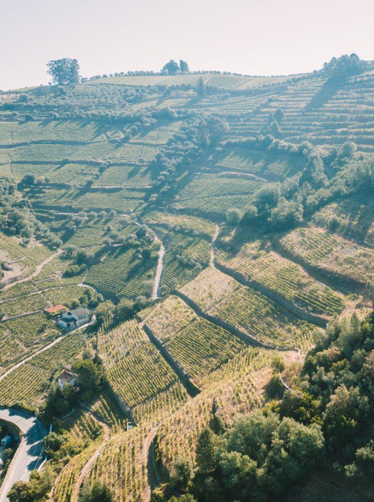 De wijnvelden in de Douro vallei van bovenaf