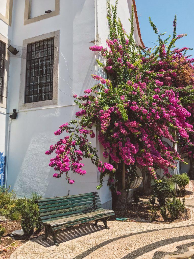 Een prachtig pleintje vol roze bloemen