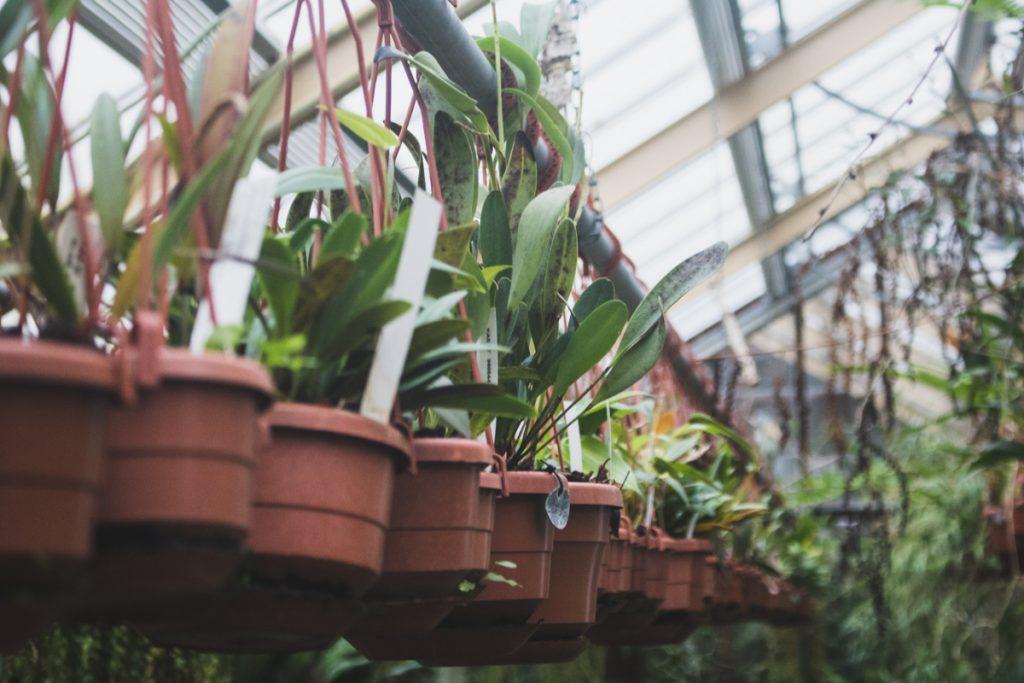 De planten in Hortus Botanicus, een botanische tuin