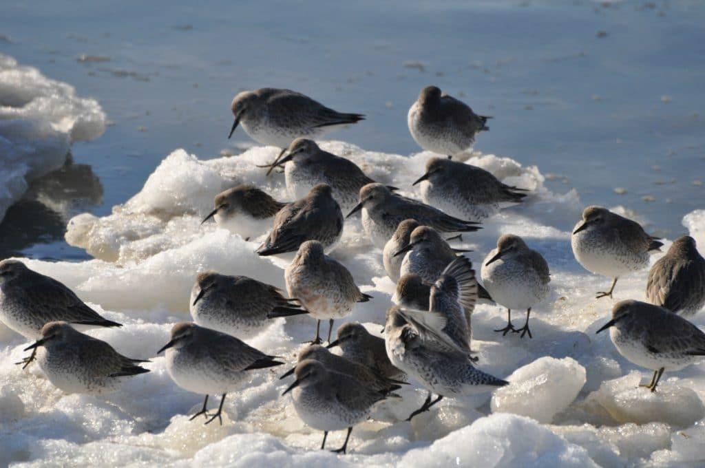 Bij de Kroon's Polder kun je tientallen vogelsoorten sporten, wat een van de leukste dingen is om te doen op Vlieland.