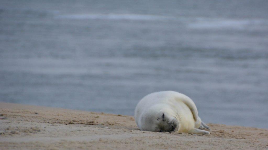 Zeehonden spotten aan de kust van Vlieland, wat ook een van de leukste dingen is om te doen!
