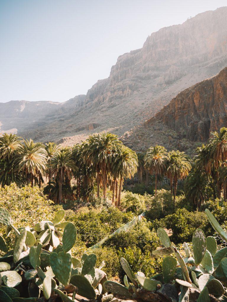 Prachtige natuur met palmbomen bij Arteara op Gran Canaria