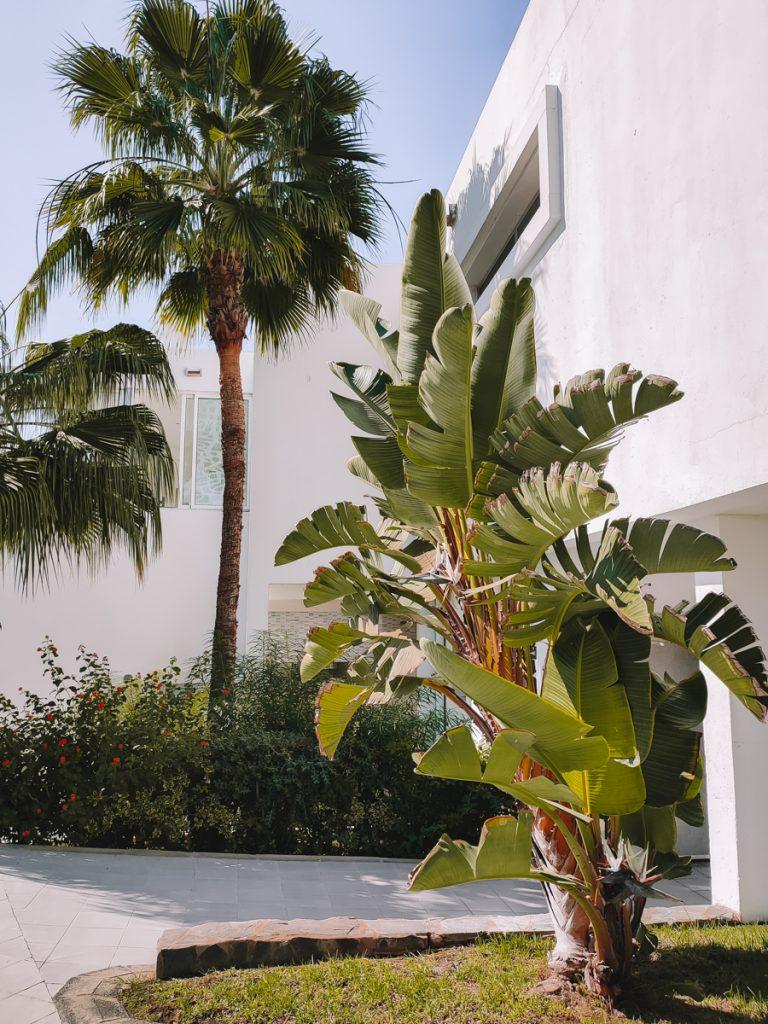 De ingang met palmbomen bij RIU Gran Canaria