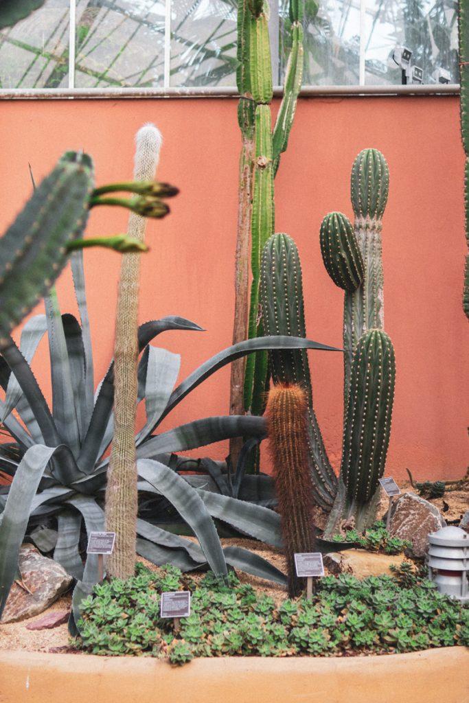 Als je van tropische planten houdt, moet je Hortus Botanicus zeker op je Nederland bucketlist zetten