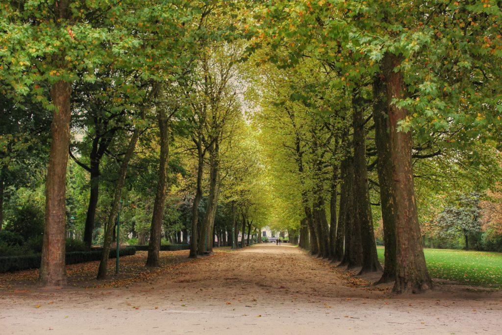 Bomen in het park