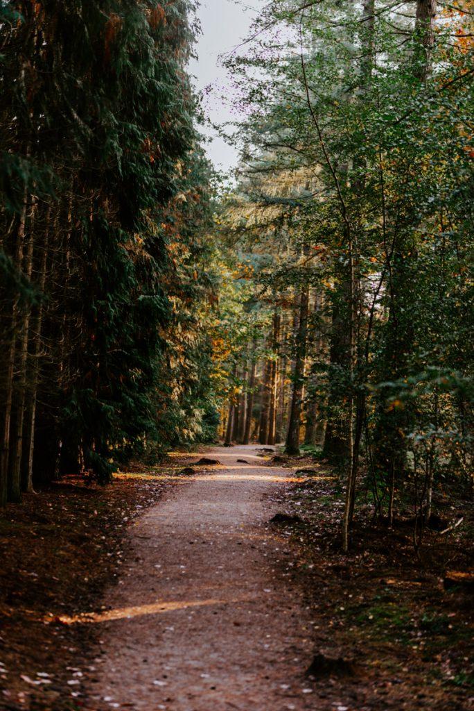 De bossen van de Veluwe