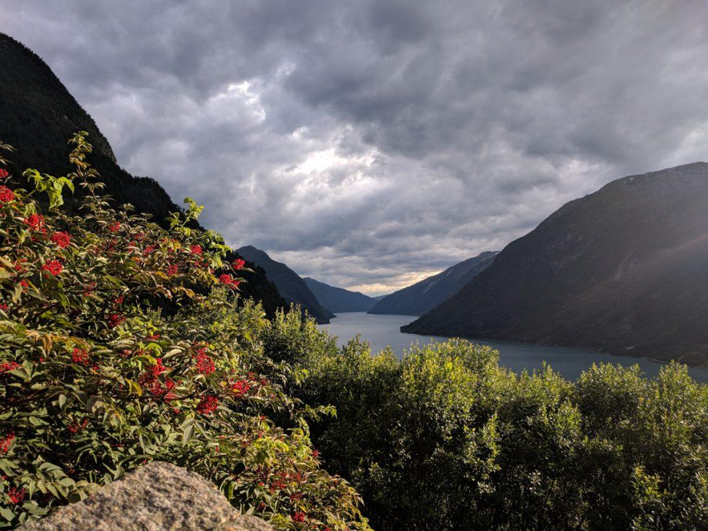 Sognefjord in Noorwegen met rode bloemen op de voorgrond
