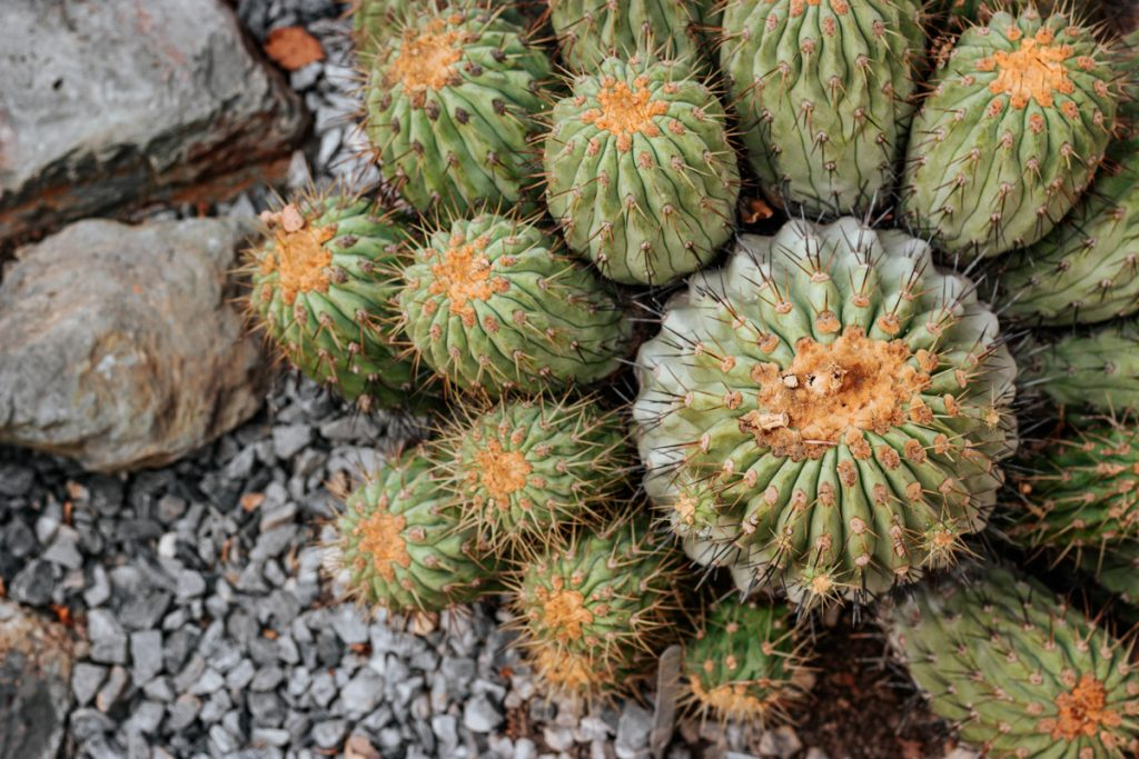 Cactussen in Trompenburg Tuinen & Arboretum, wat een van de mooie plekjes van Rotterdam is