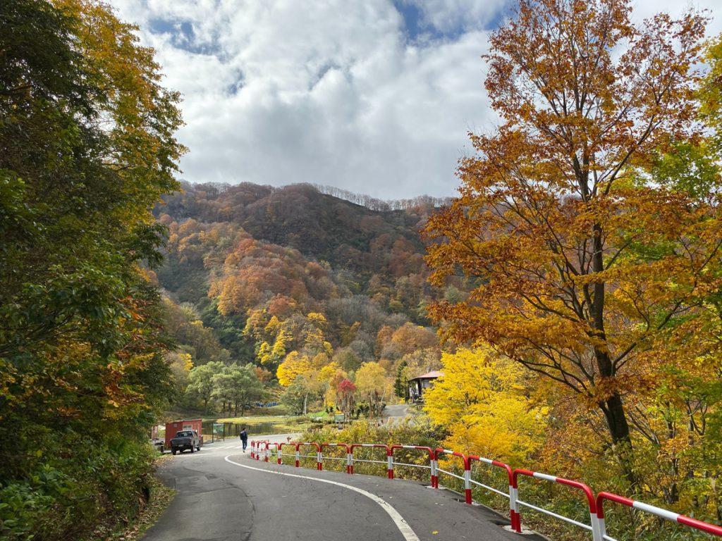 Roadtrip over een geasfalteerde weg in Japan tussen de bomen en bossen in herfstkleuren