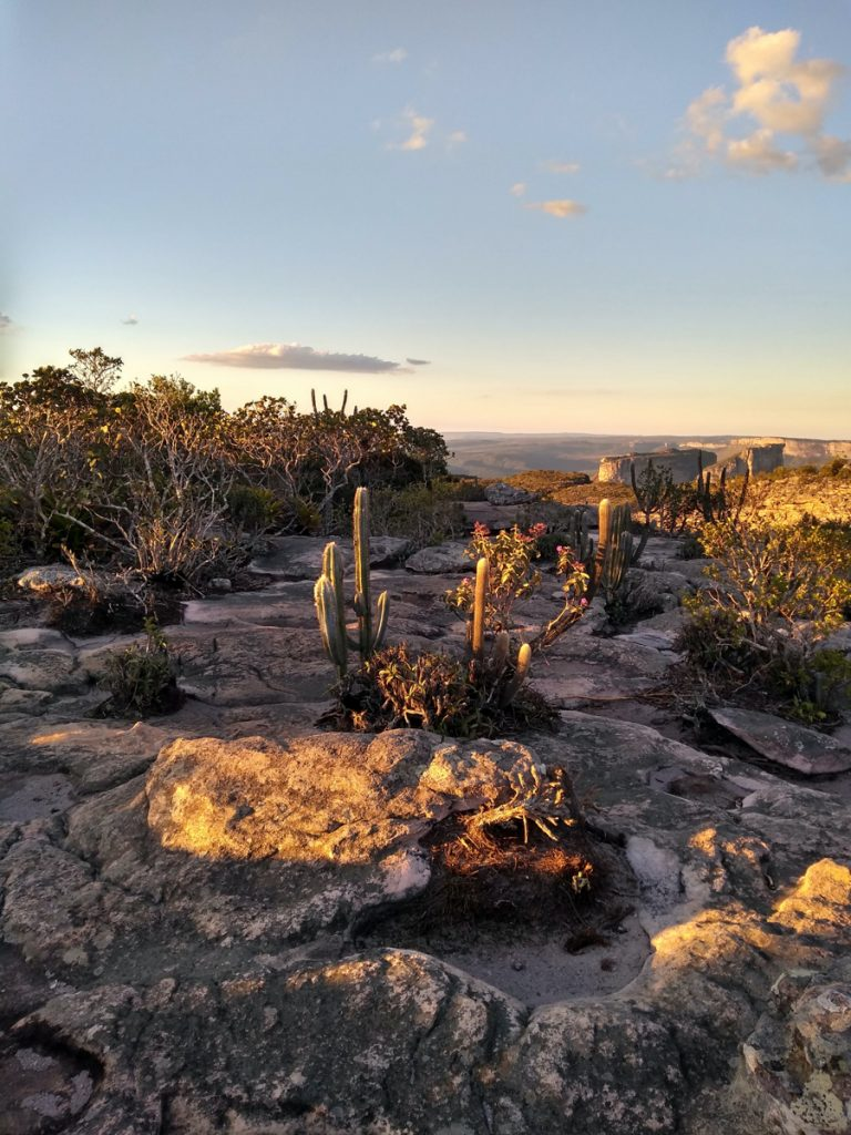 Cactussen belicht door een zonsondergang in het Chapada Diamantina National Park