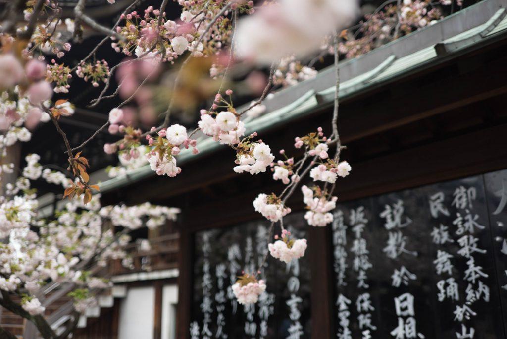 Roze kersenbloesem bij een tempel met Japanse tekens