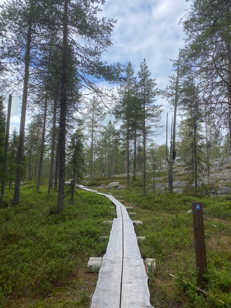 Een trail door de bossen van Finland