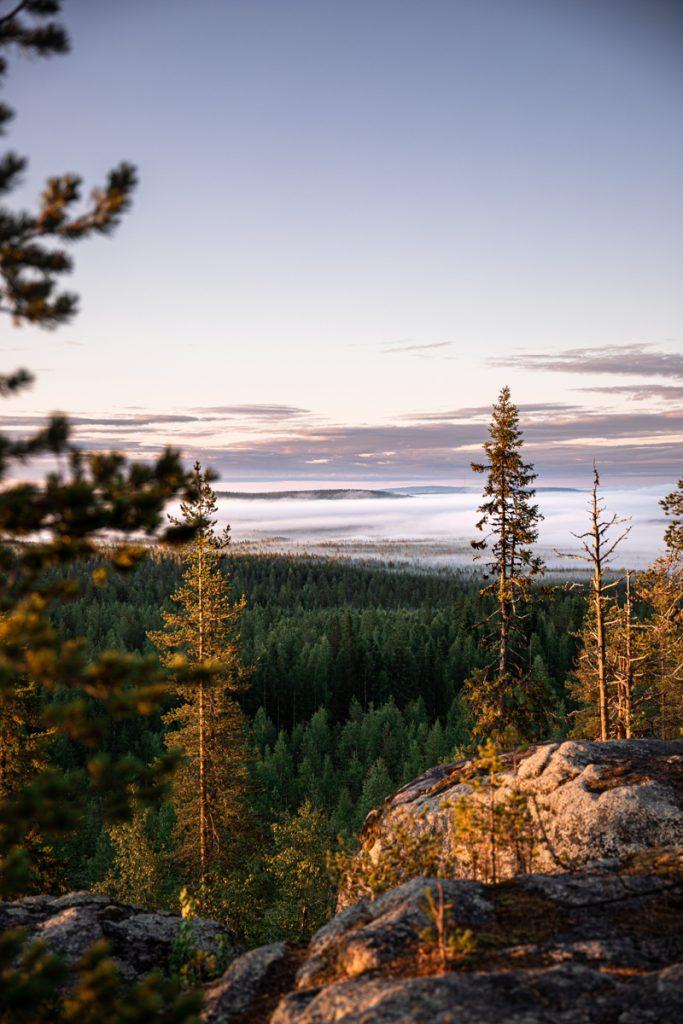 Typisch voor Finland zijn de vele bossen
