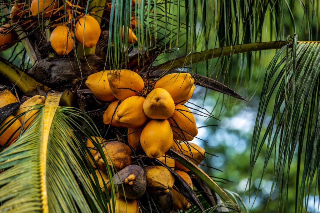 Fruit behoort absoluut tot het Costa Ricaans eten wat veel wordt gegeten
