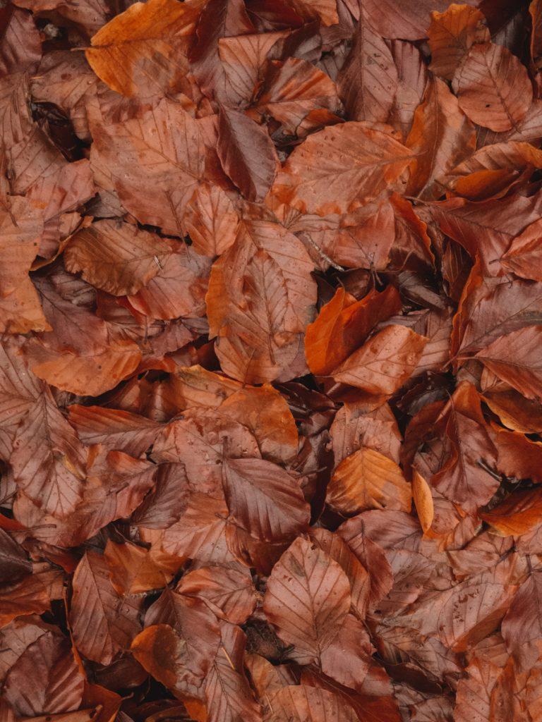 Herfst en rode bladeren in Drenthe