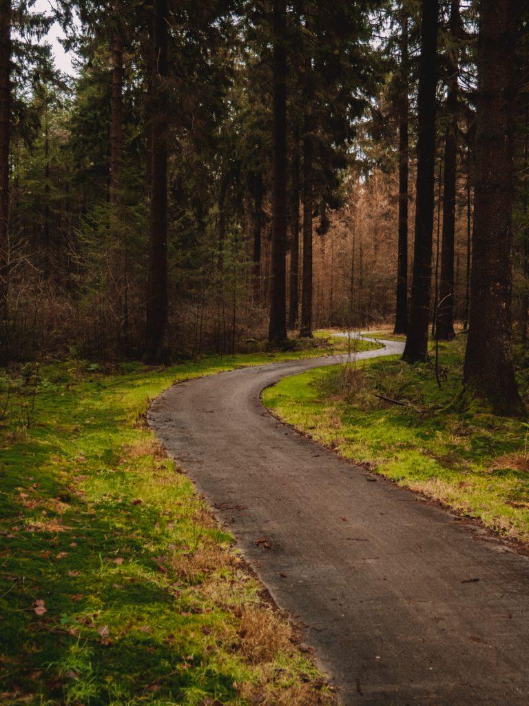 Tijdens een rondreis door Nederland is het leuk ook naar Drenthe te gaan en door de prachtige natuur te wandelen