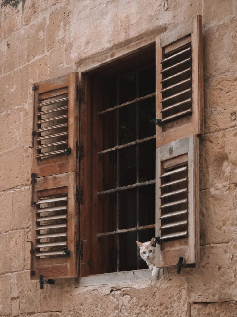 Een kat uit het raam in Valletta